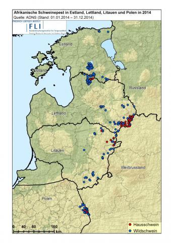 Ausbreitung der afrikanischen Schweinepest in der EU 2014 (Quelle: FLI)