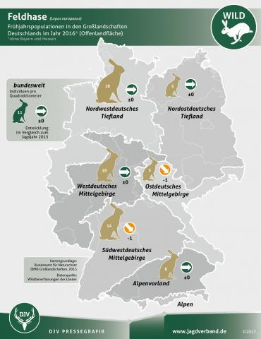 Feldhasen: Vorkommen Deutschland 2016