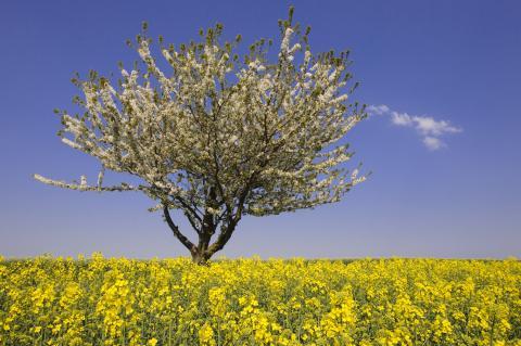 Blühende Landschaft im Frühjahr