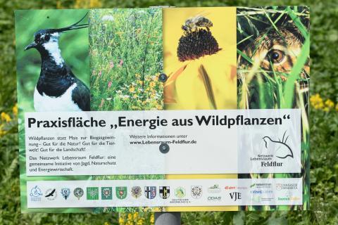 Schild: Praxisflächen Energie aus Wildpflanzen