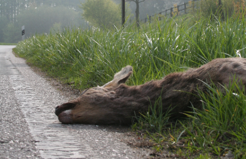 Totes Reh am Straßenrand