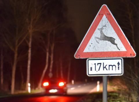 Verkehrsschild: Achtung Wildunfallgefahr