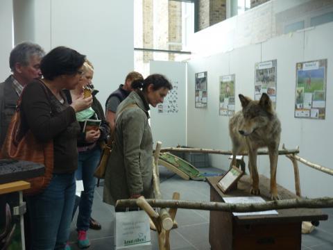 Ein Besucher-Magnet: Das Wolfspräparat lockte zahlreiche Besucher. (Quelle: DJV)