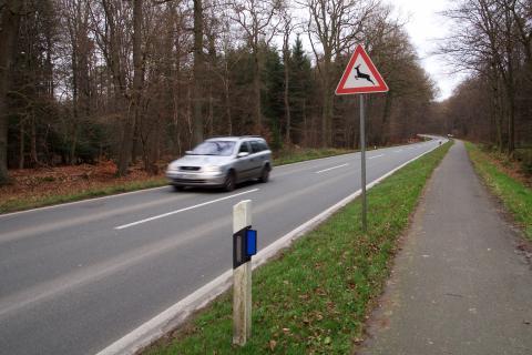 Im Frühling locken frisches Grün und Streusalzreste besonders Rehe an Straßenränder. (Quelle: Kaufmann/DJV)