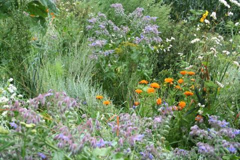 Blühstreifen tragen zur biologischen Vielfalt bei. (Quelle: Börner/DJV)