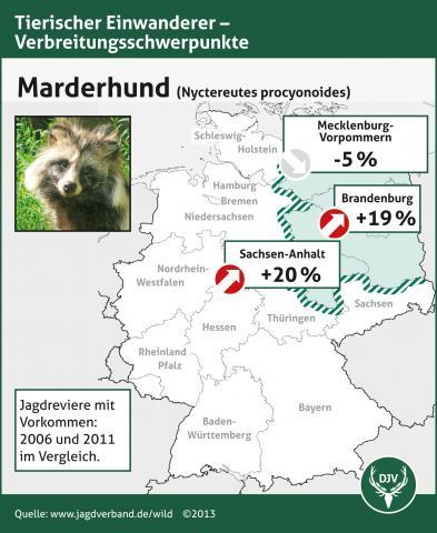 WILD-Monitoring: Marderhund-Verbreitungsschwerpunkte Vergleich 2006/11