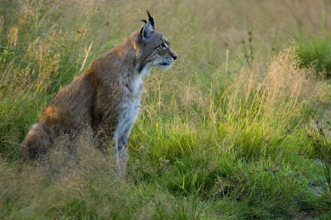 Jäger beteiligen sich aktiv am Monitoring  (Quelle: Rolfes/DJV)