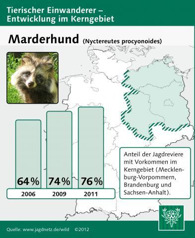 Marderhund: Entwicklung im Kerngebiet 2006-2011