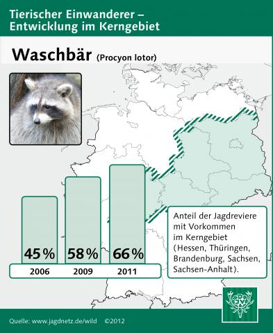 Waschbär: Entwicklung im Kerngebiet 2006-2011