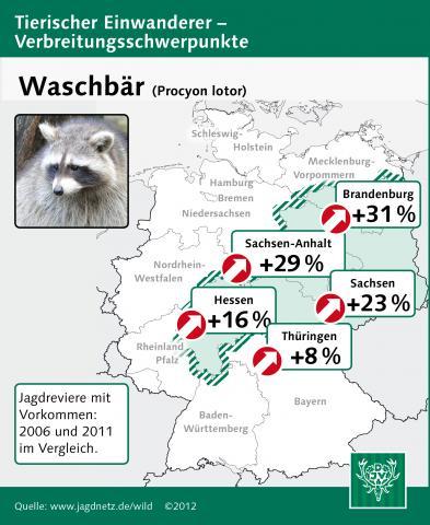 Waschbär: Verbreitung 2006-2011