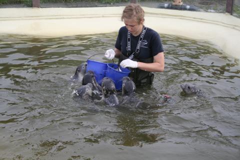 Fütterung von Seehunden in Auffangstation