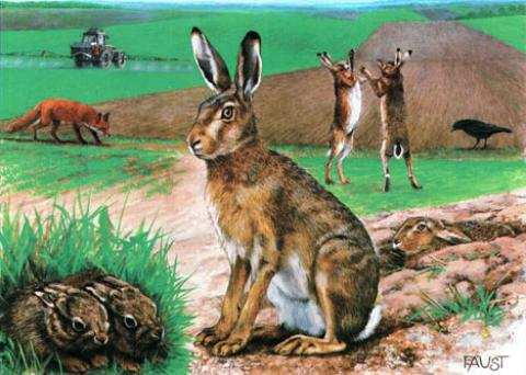 Poster Lernort Natur Hase
