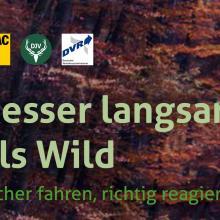 Wildunfallbroschüre von DJV und ADAC.