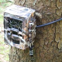 Eine Wildkamera dient der Beobachtung von Wildtieren.