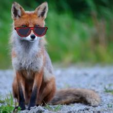 Tiere haben unterschiedliche Strategien im Sommer cool zu bleiben.