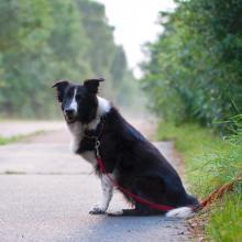 ausgesetzter Hund