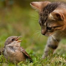 Katze mit Vogel