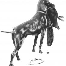 Logo des Jagdbebrauchshundverbandes (JGHV)