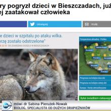 Polnische Nachrichten: Wolf beißt zwei Kinder und wird erschossen