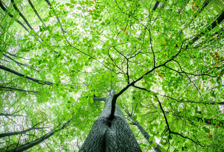 Waldstrategie 2050: DJV fordert einen vom BMEL moderierten runden Tisch für praxistaugliche Lösungen.
