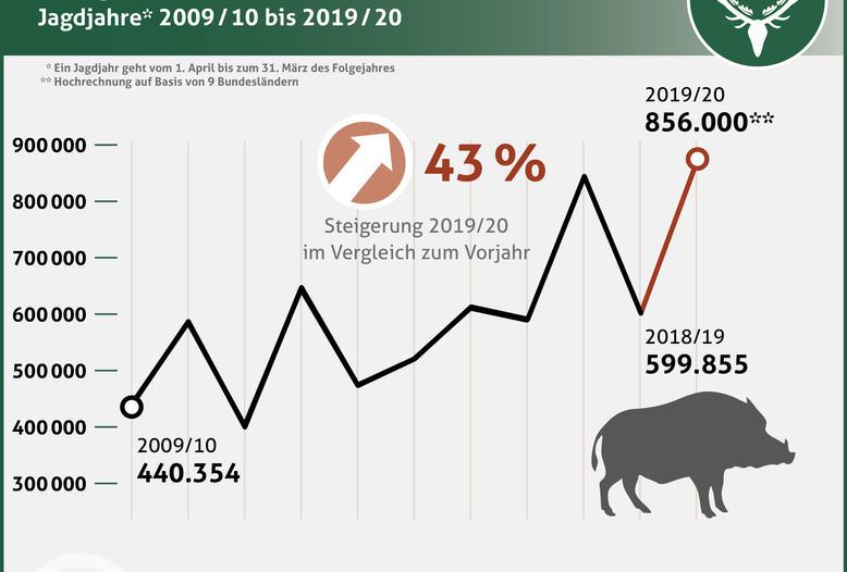 Nach einer ersten Hochrechnung haben die Jäger in Deutschland etwa 856.000 Wildschweine im Jagdjahr 2019/20 (1.April bis 31. März) erlegt.