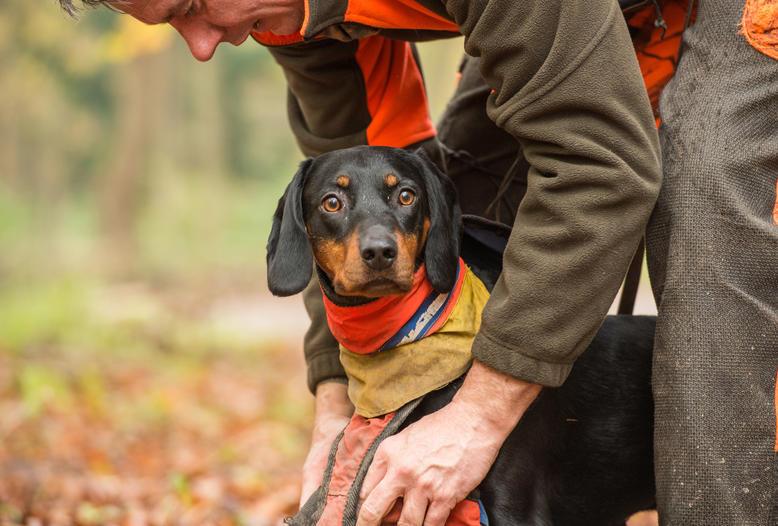 Behandlung von verletzten Jagdhunden: Reserveantibiotika dürfen auch künftig für Haustiere eingesetzt werden.