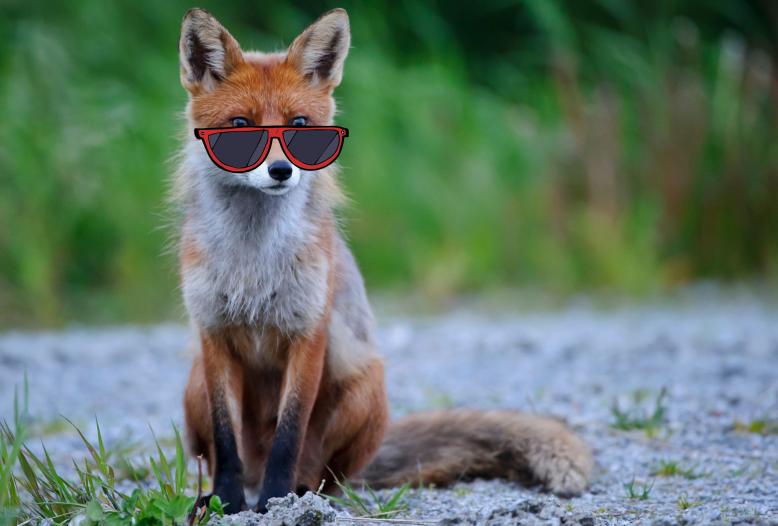 """Um bei sommerlicher Hitze """"cool"""" zu bleiben, haben viele Wildtiere clevere Strategien entwickelt."""