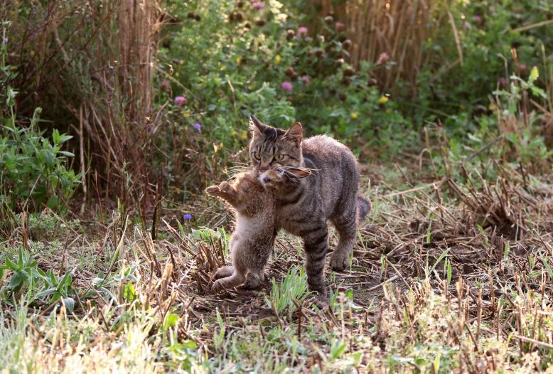 Viele Vögel, kleine Säugetiere und Reptilien fallen verwilderten Hauskatzen zum Opfer.