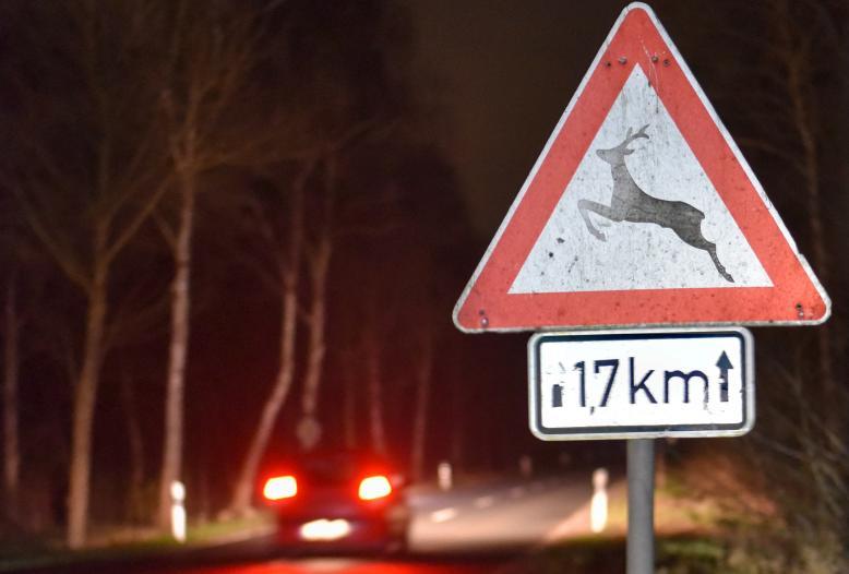 Besonders unfallträchtig sind Straßen entlang der Wald-Feld-Kante oder durch den Wald.