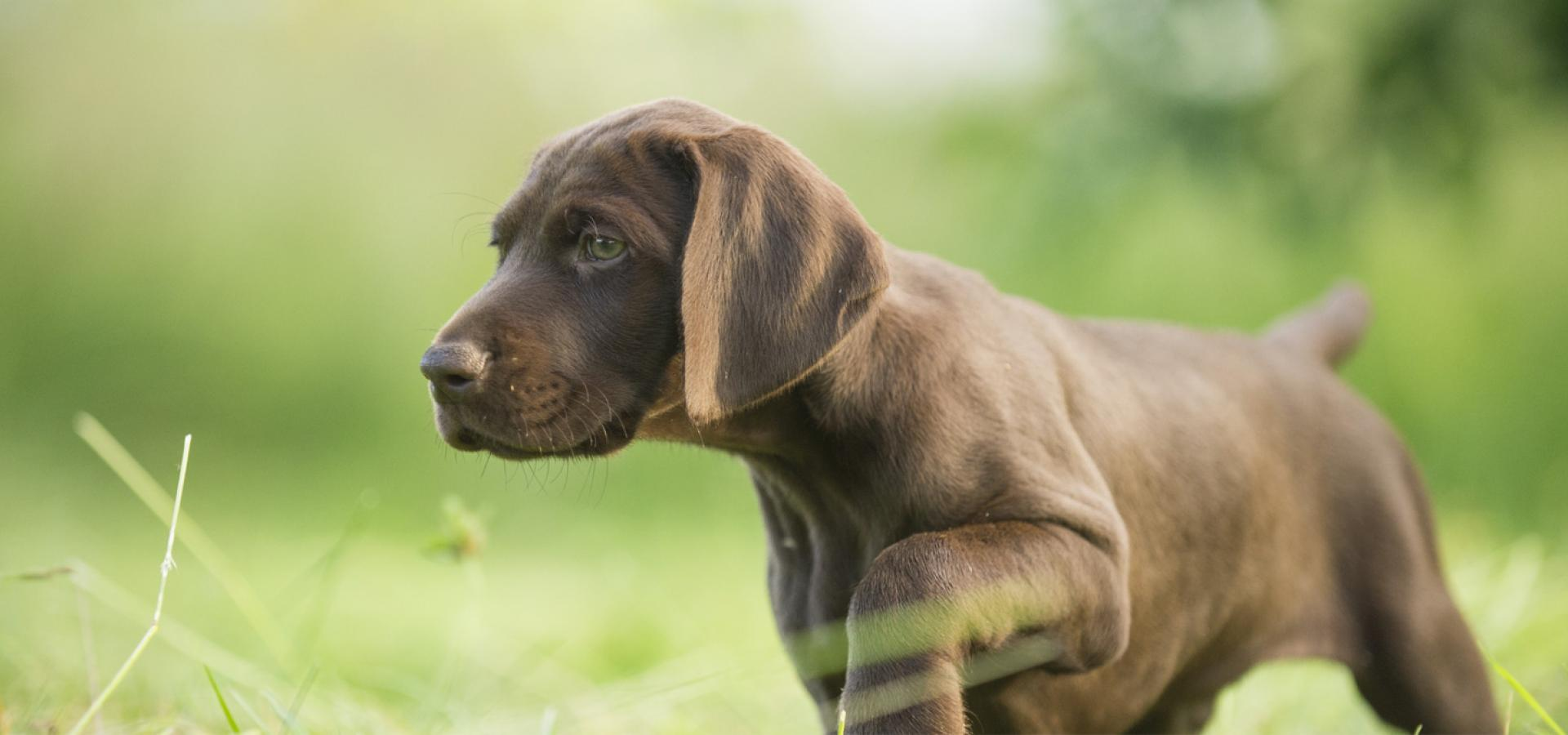 dürfen hunde kastanien essen
