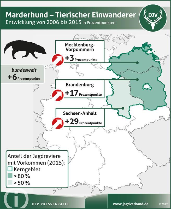 Marderhund: Verbreitung 2006-2015 (Quelle: DJV)