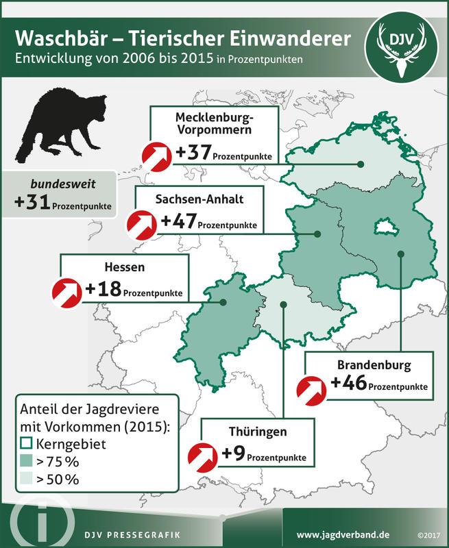 Waschbär: Verbreitung 2006-2015 (Quelle: DJV)