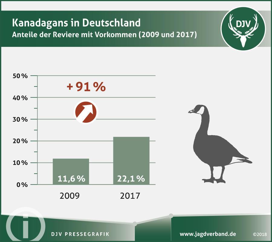 pretty nice 33553 6bbd2 Exotische Gänse breiten sich aus | Deutscher Jagdverband