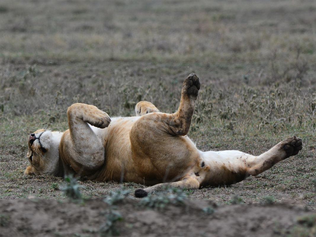 IUCN Nachhaltige Trophenjagd trgt zum Artenschutz bei