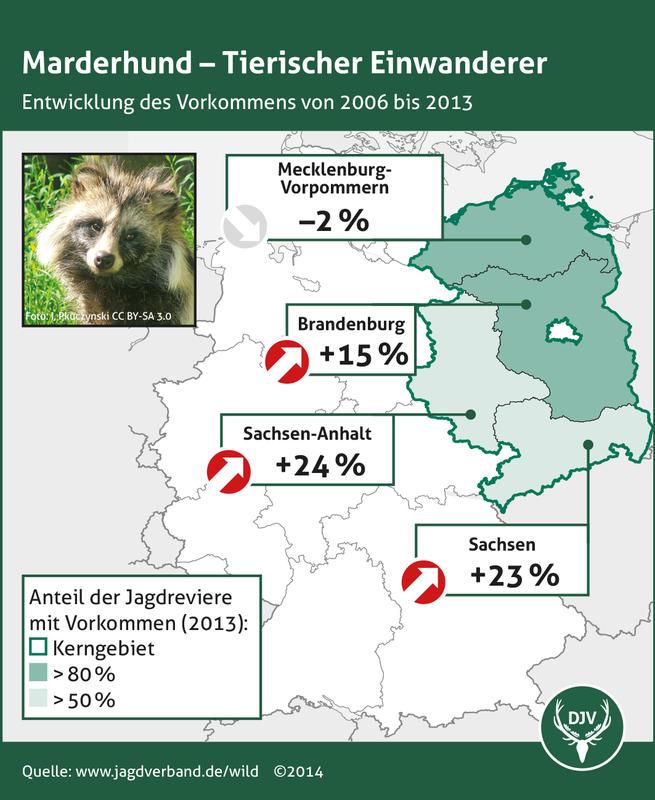 Marderhund - Entwicklung des Vorkommens 2006 bis 2013 (Quelle: DJV)
