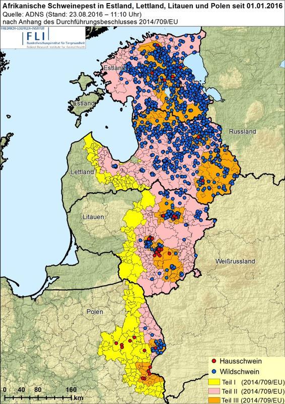 Ausbreitung der afrikanischen Schweinepest in der EU 2016 (Quelle: FLI)